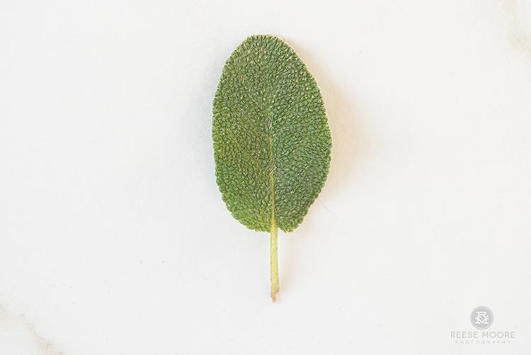 hardyplants-1547.jpg