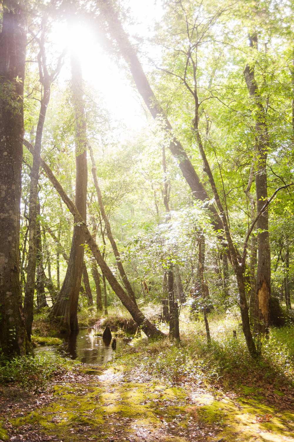treehouseontheedisto-6053.jpg