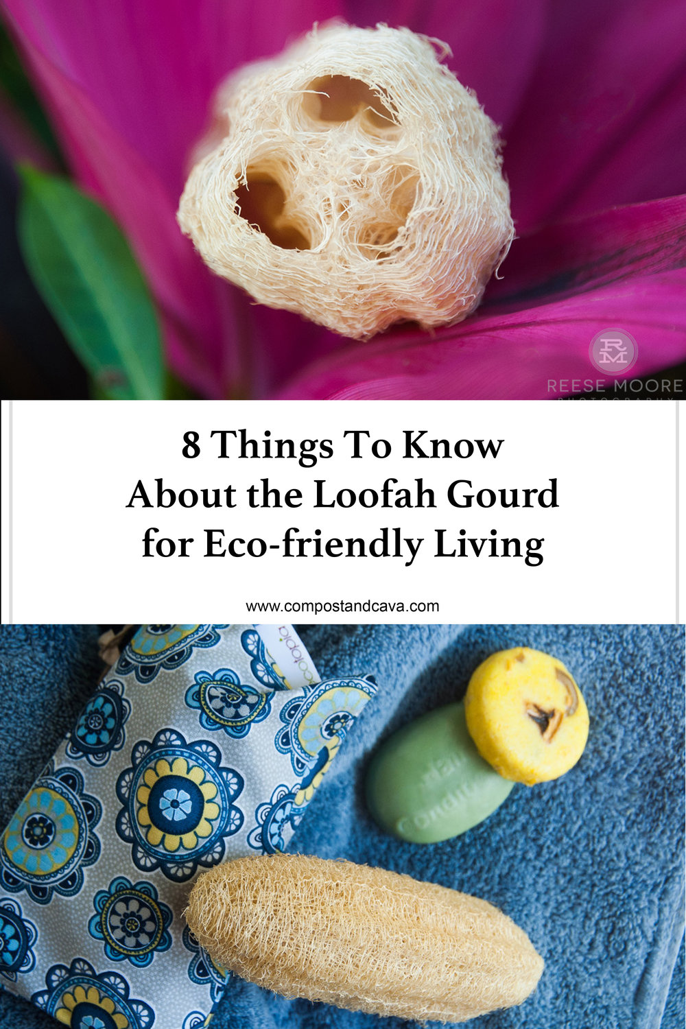 8 Awesome Things To Know About The Loofah Gourd for Eco-Friendly Living