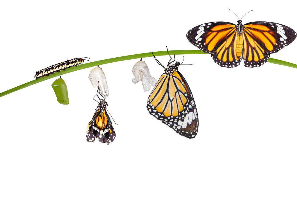 Life Transition Assistance -