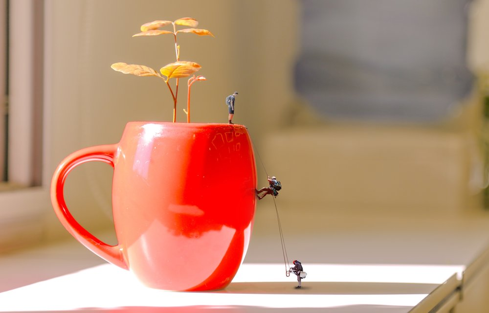 flowerpot-climb-1873479.jpg