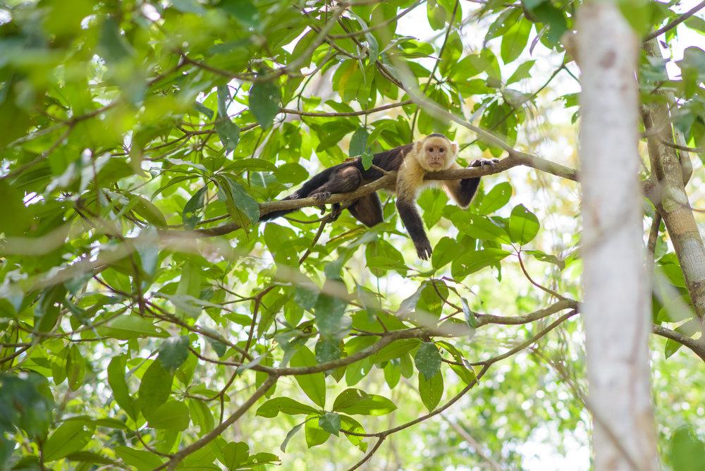 Monkeys-03.jpg