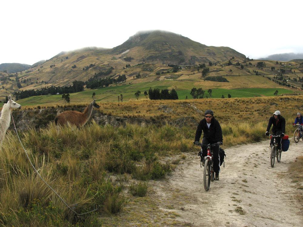 bike llamas  andes mountains