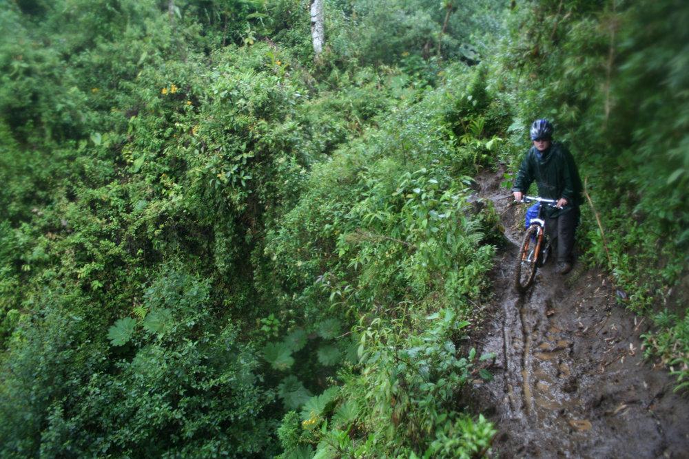 bike tour forest