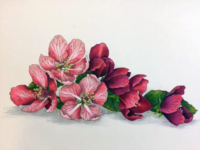 Della Sakura.jpg