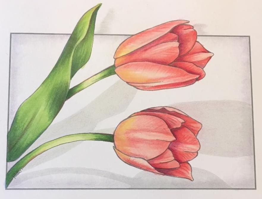 Eva Tulips.jpg