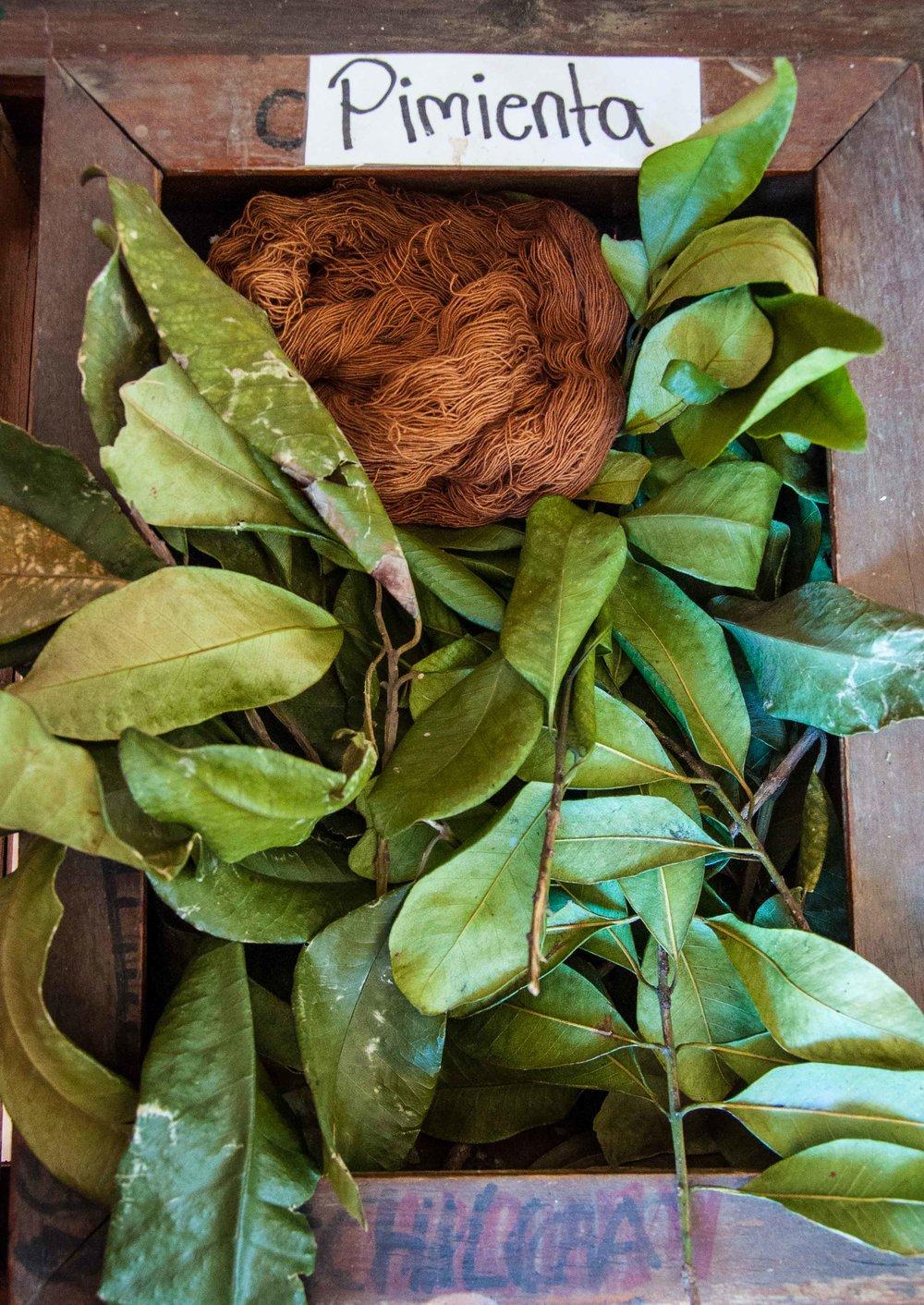 dye-tray-pimienta-0865.jpg