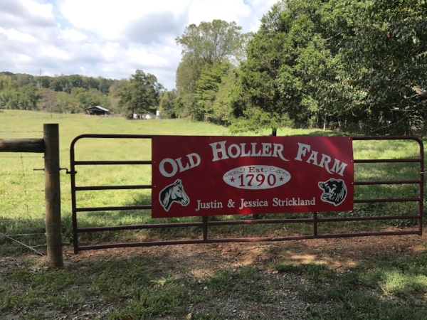 Old Holler Farm is a working cattle farm and farm wedding venue near Winston Salem, NC