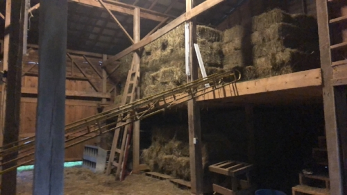 hay barn for grass fed cattle at old holler farm in rural hall, nc