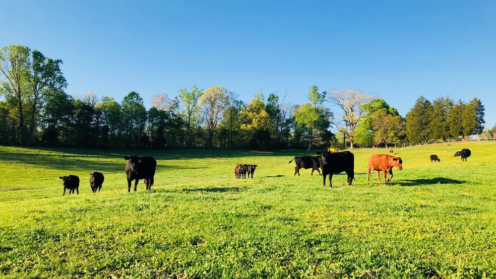 Grass Fed Cattle - We pride ourselves on raising our cattle as natural as possible and NEVER use steroids or growth hormones. All beef is USDA inspected & approved, dry aged to enhance flavor and tenderness, and vacuum packed to ensure freezer quality. If you haven't tasted the difference of grass-fed beef, visit our grass-fed beef page and browse our selection of 10lb and 25lb beef boxes! Free Shipping straight to your door!