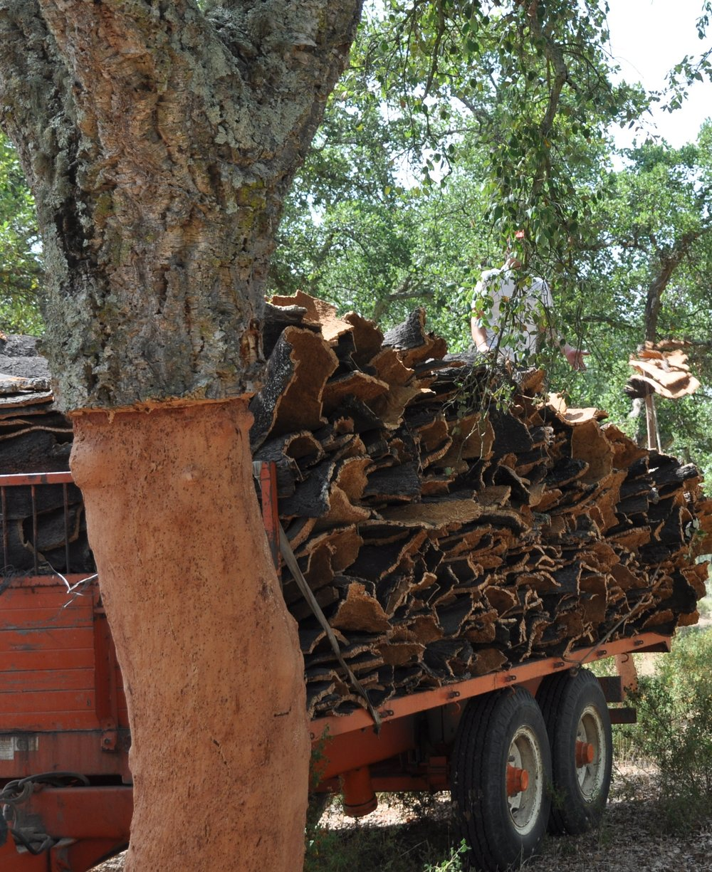 cork-bark-cork-harvest.jpg