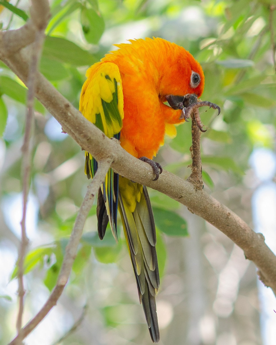 Parrot2.jpeg