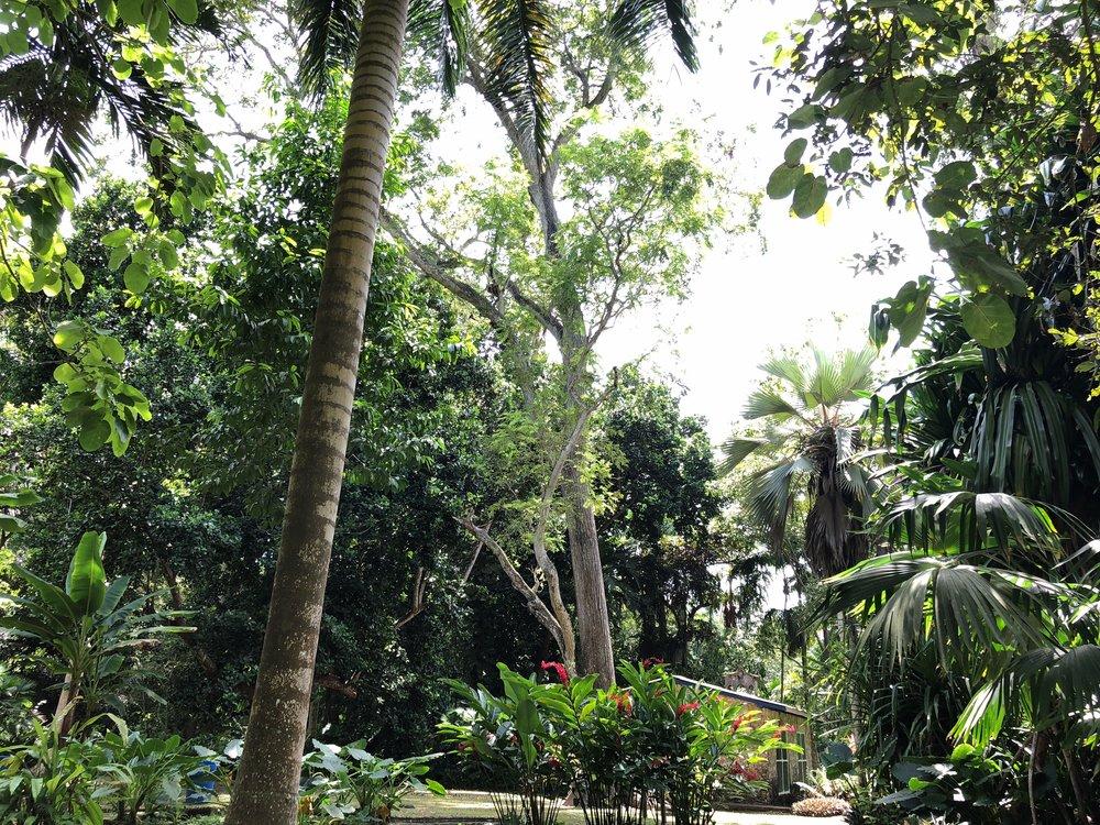Jardin Botanico.jpg