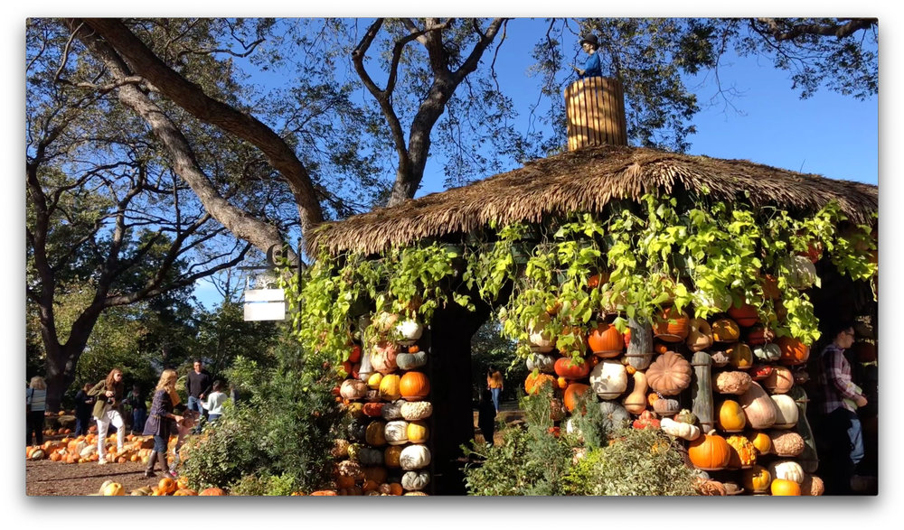 One of the many pumpkin displays in the Dallas Arboretum and Botanical Gardens.