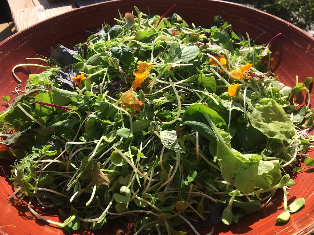 Om Grown Deluxe Mix  - For a zesty, nutritious salad that's out-of-this-world, throw together a mix of our freshest microgreens and sprouts, and top with your favourite dressing. So good!