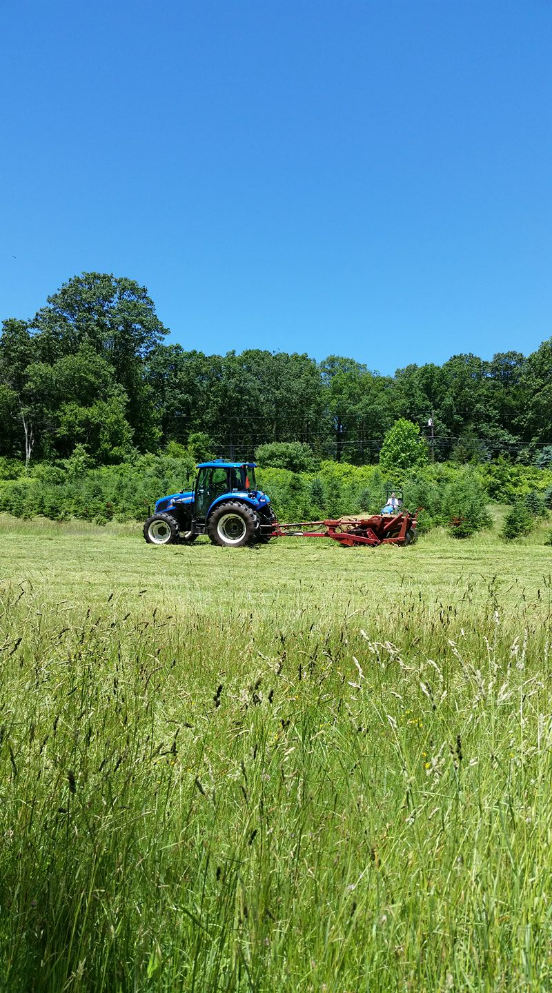 Cutting hay during the summer.