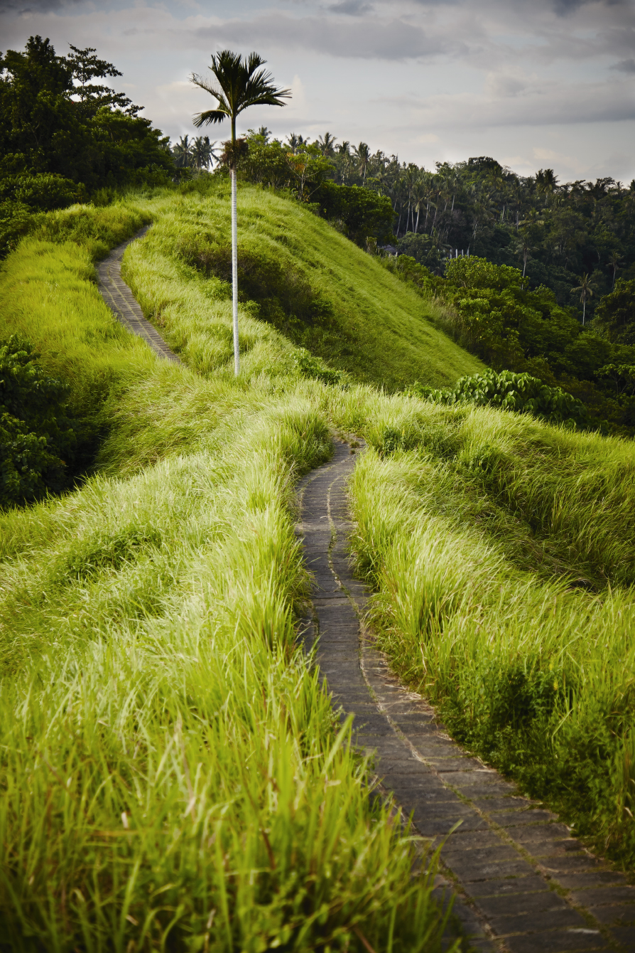 Choose the path less traveled......(Ubud, Bali, Indonesia)