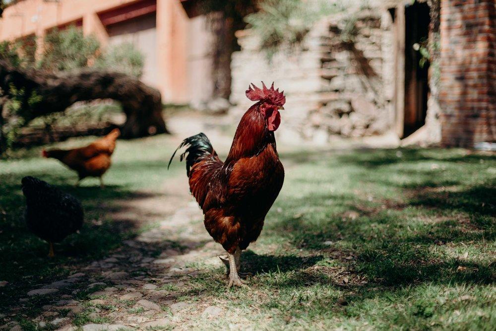 Esme & Angel | PW Hacienda Sepulveda 059.jpg