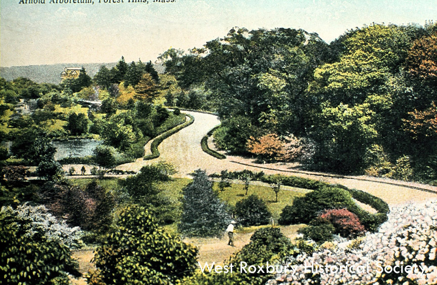 Arnold Arboretum courtesy of West Roxbury Historical Society