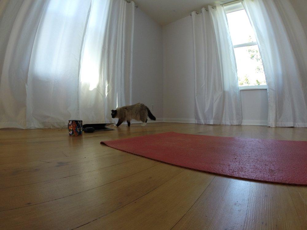 yogacashew.jpg