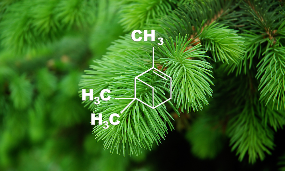 α-Pinene - Potential Medical Benefits:  Pain relief,  Anti-ulcers, Anti-anxiety, Bronchodilator and Anti-cancerFlavor Profile : PineThis terpene is the most common naturally occurring terpenoid and has a pine scent and helps to give cannabis its distinct aroma. Scientific studies show it may decrease anxiety, pain, ulcers, inflammation and cancer.  This terpene is produced naturally by a variety of plants and whose aroma of fresh pine needles gives it its name. In addition to being found in pine trees, pinene is produced by many herbs, such as basil, parsley and dill. Satou et al., 2014 | Quintao et al., 2010 | Takayama et al., 2011 | Rufino et al., 2014 | Nam et al.,2014 | Matsuo et al., 2011 | Kusuhara et al., 2012 | Zhang et al., 2015