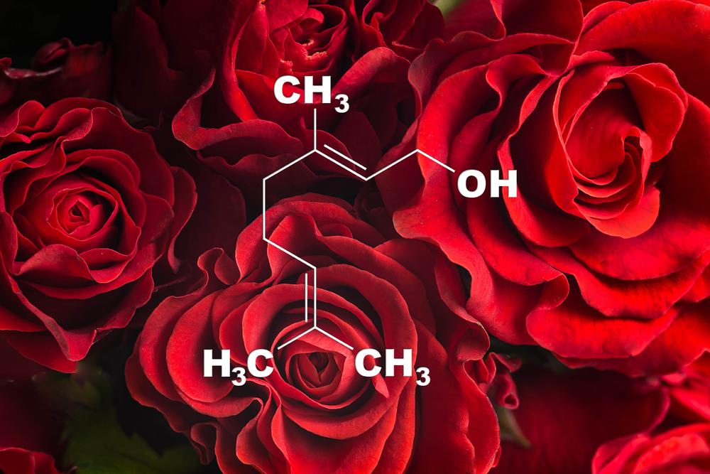 Geraniol - Potential Medical Benefits:  Anti-depression, Pain relief, Anti-inflammation, Anti-neurodegeneration, Anti-cancer, Anti-atherosclerosisFlavor Profile : RoseThis terpene has a floral scent like roses. Scientific studies show this terpene may decrease depression, pain, inflammation, cancer, atherosclerosis and neurodegeneration. Deng et al., 2015 | Prasad et al., 2014 | Marcuzzi et al., 2008 | Ahmad et al., 2011 | Chaudhary et al., 2012 | Karamkolly et al., 2013 | Jayachandran et al., 2015