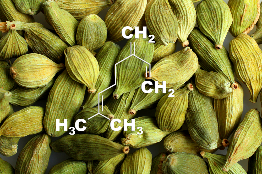 β-Myrcene - Potential Medical Benefits:  Neuroprotective, Anti-inflammatory, Pain relief, Anti-insomniaFlavor Profile : CardamomThis terpene smells a bit like cardamom and cloves. Scientific studies show this terpene maybe neuroprotective, anti-inflammatory and also beneficial for pain. Myrcene is a prevalent terpene and is found in most varieties of cannabis. High concentrations of myrcene have been shown to induce sedation. Myrcene is also present in thyme, hops, lemongrass, and citrus, and is used in aromatherapy.Ciftci et al., 2014 | Souza et al., 2003 |do Vale et al., 2002 | Rao et al., 1990