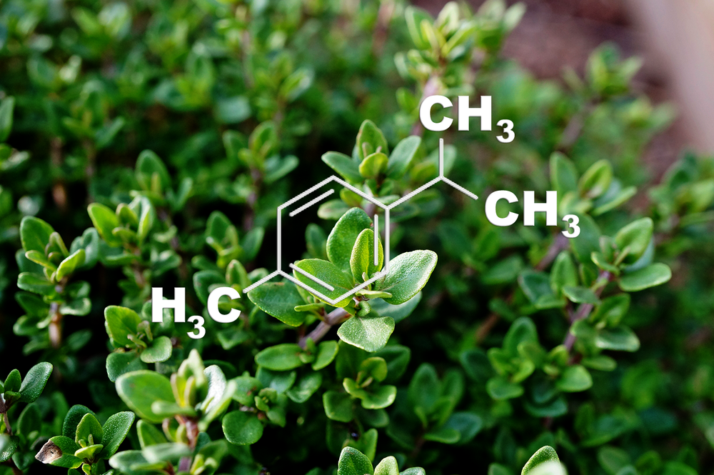 p-Cymene - Potential Medical Benefits:  Anti-anxiety, Anti-inflammation, NeuroprotectionFlavor Profile : ThymeThis terpene is said to contain a musty scent and is also found naturally in thyme and cumin. Scientific studies show this terpene may decrease anxiety and is neuroprotective. This terpene may also reduce inflammation.González-Trujano et al., 2017 | Games et al., 2016 | Chen et al., 2014 | Sammi et al., 2017 | Lotfi et al., 2015