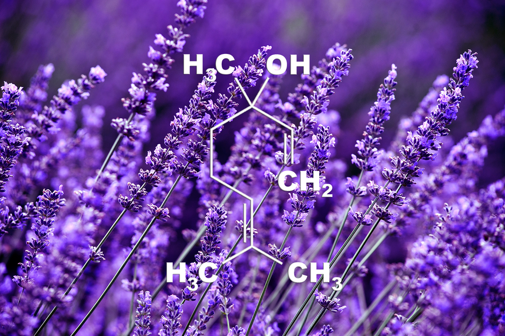 Linalool - Potential Medical Benefits:  Anti-anxiety, Anti-depression, Pain relief, Anti-inflammation, Anti-neurodegeneration, Anti-insomniaFlavor Profile : Lavender, FloralThis terpene has a floral scent and is also found in lavender. Scientific studies show this terpene may decrease anxiety, depression, chronic pain, neurodegeneration and inflammation. High concentrations of linalool have been shown to induce sedation.Xu et al., 2017 | Sabogal-Guáqueta et al.,2016 | Gastón et al., 2016 |  Souto-Maior et al., 2017 | Nascimento et al., 2014 | Wu et al., 2014 | Huo et al., 2013 | Souto-Maior et al., 2011 | Batista et al., 2010 | Linck et al., 2009|Cline et al., 2008 | Peana et al., 2004| Peana et al., 2003 | Elisabetsky et al., 1999