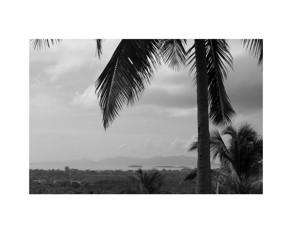 15 - Under The Palms.jpg