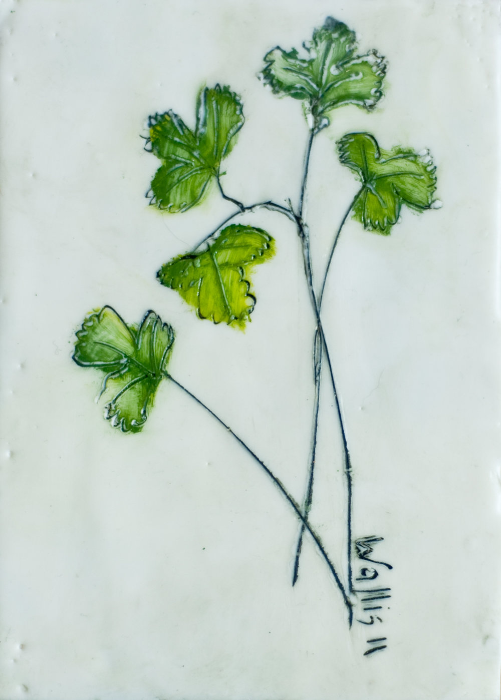 Wallis_HERBS-Cilantro encaustic art