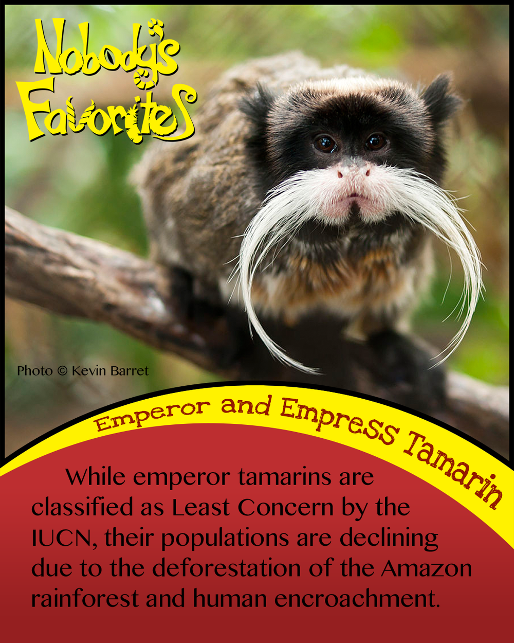 Emperor Tamarin - Conservation