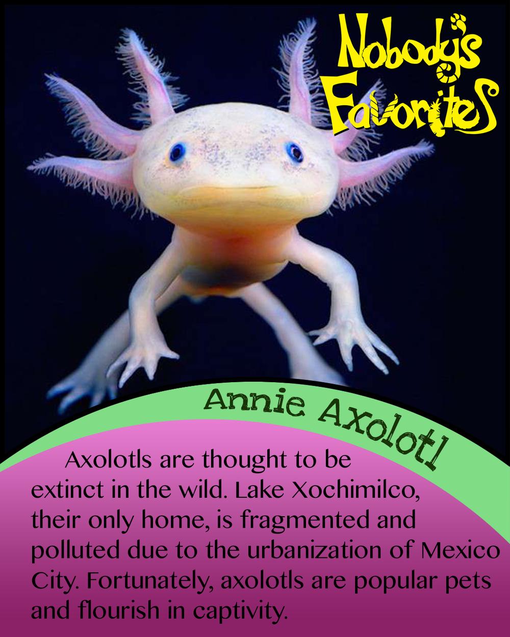 Annie Axolotl - Conservation