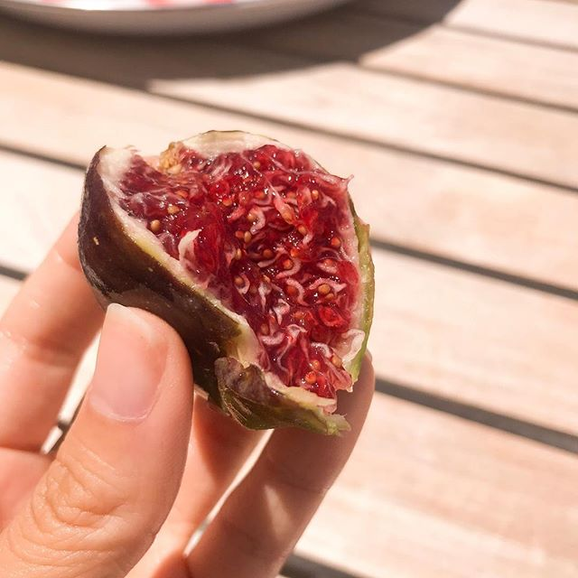 FIGS are the best (healthy) summer treats — I miss munching on these all day, on its own or with goat cheese / mascarpone and honey. 😋 If only they were more accessible / affordable in Asia, does anybody know where I can find fresh figs in HK? #healthytreats
