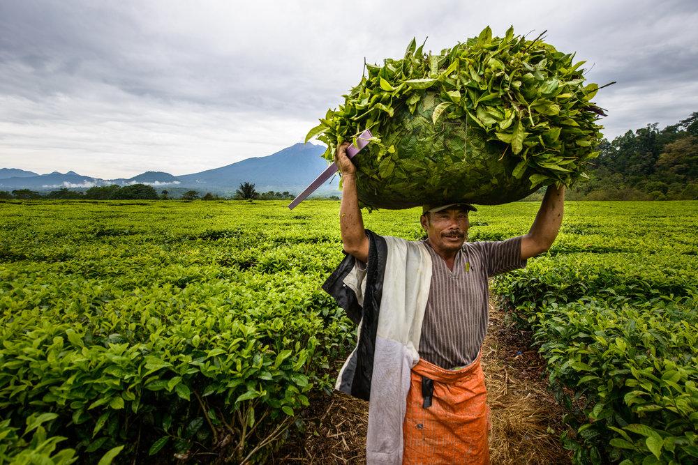 Sumatra - Indonesia