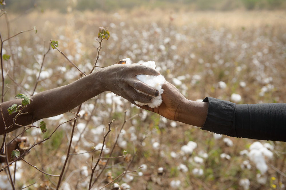 Cotton clouds - It is cotton harvest season in the Sahel region of Côte D'Ivoire and entire families, including the little ones, work all day long in the fields to get the cheap cotton that the international markets demand.
