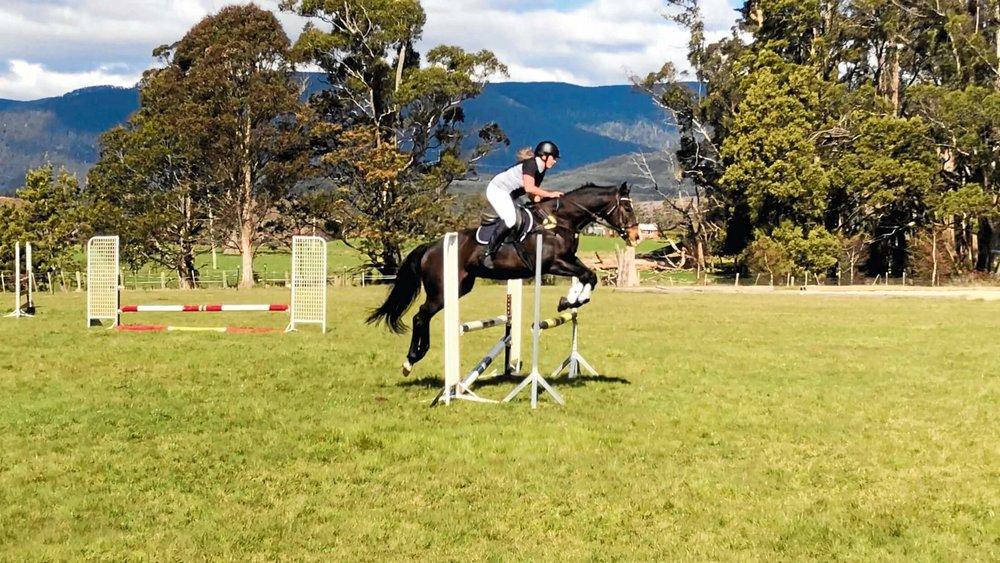 horse 6.jpg