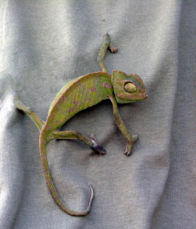 chameleon-2-1548513.jpg