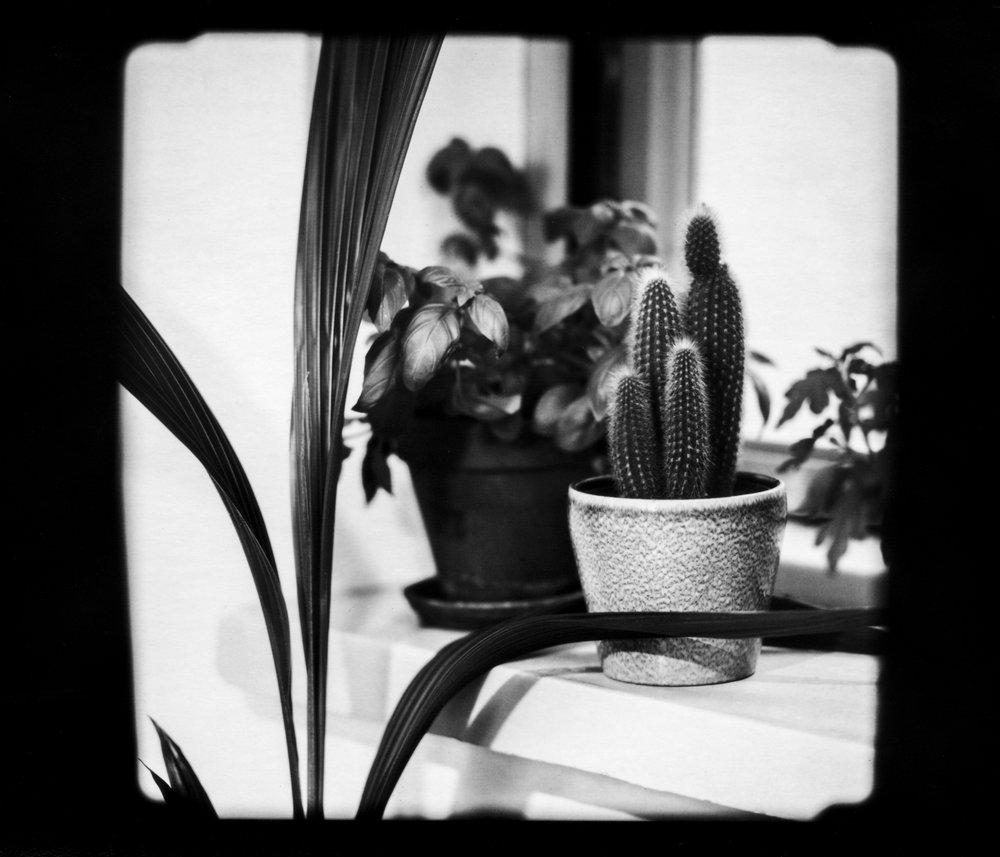 07 cactus.jpg
