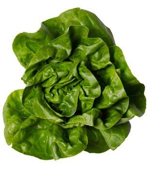 Bibb Lettuce