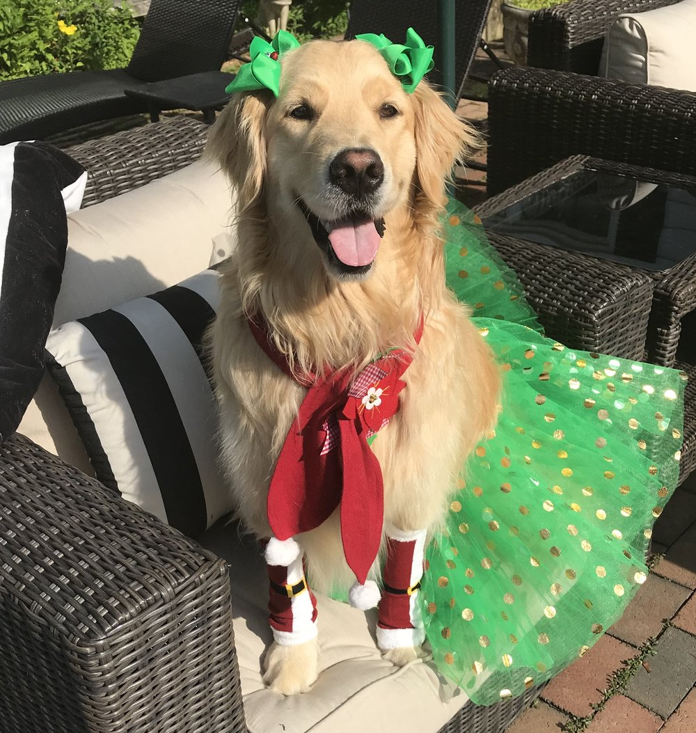 It's Christmas in July at The Birthday Puppy - From July 1 to July 31, each purchase of $50.00 or more will come with a gift. But you get to choose. You can send a Secret Santa gift on us to a friend, we can send you the Secret Santa gift and you can keep it, or you can have a $10.00 gift certificate to use on our Holiday Boxes! Just let us know your choice at checkout.