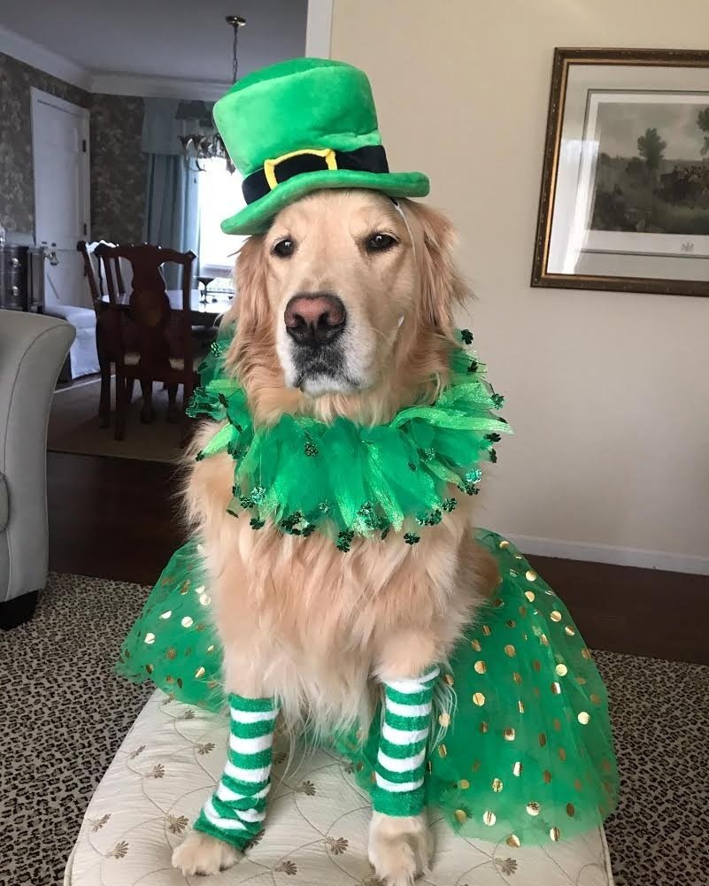 We know you can't wait to celebrate St. Patrick's Day in style, so we have everything you need in our  Happy Go Lucky Shop ! There are tons of toys, outfits, and accessories to celebrate in Irish style.