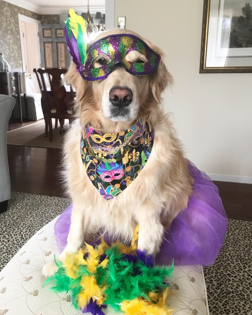 Our  Mardi Gras  Shop is open! We have lots of toys and accessories so you can look festive, whether you are partying it up in New Orleans or celebrating at home!