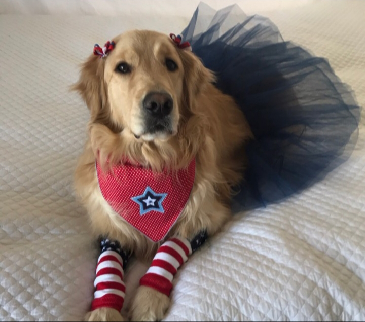 Pawtriot Store - We are coming up on summer, which means some of our favorite Americana holidays to celebrate. Get ready for Memorial Day, Fourth of July, and Labor Day with all of our red, white, and blue accessories and toys! If you are an All-American pup, this shop is for you!