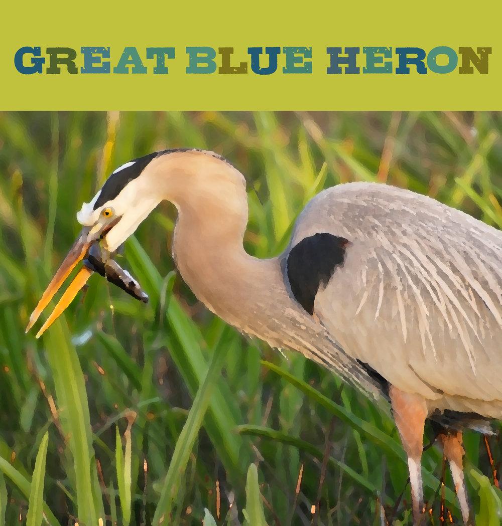 BlueHeron2.jpg