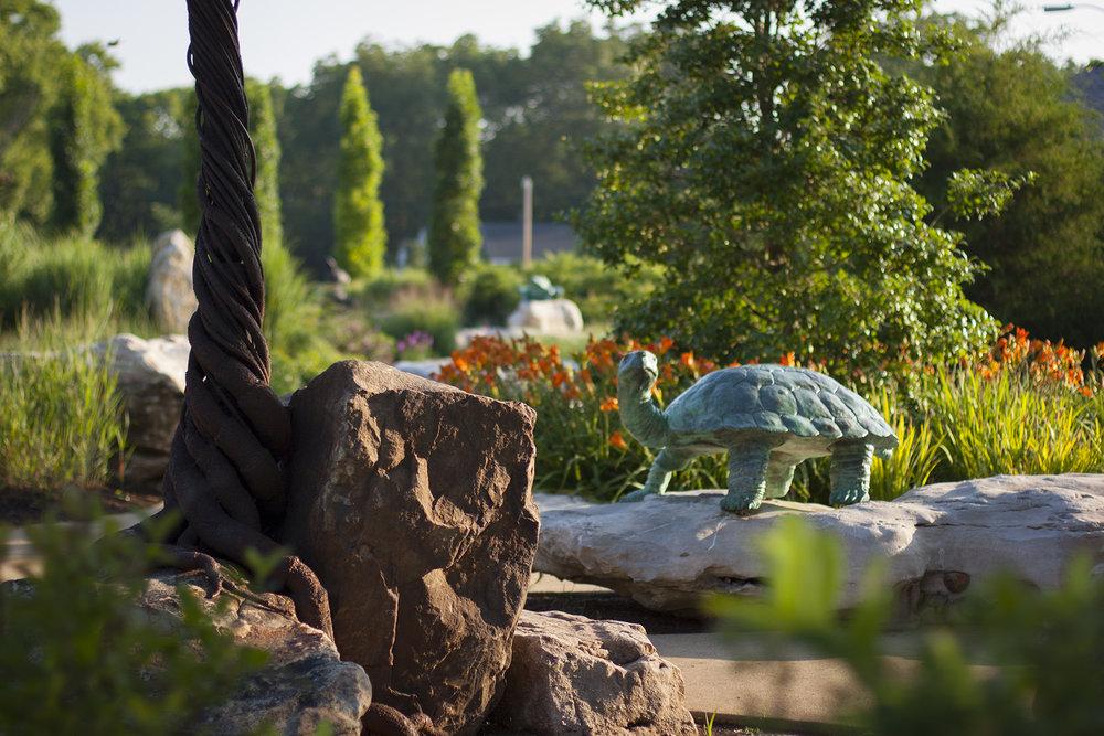 DP_RW_turtle2.jpg