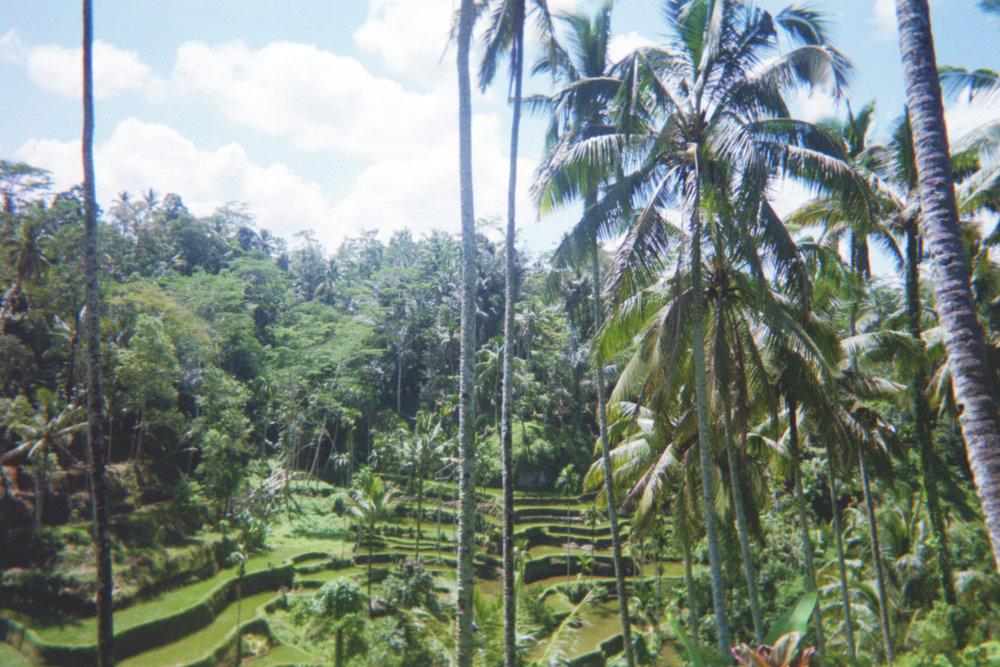 riceterraces.jpg