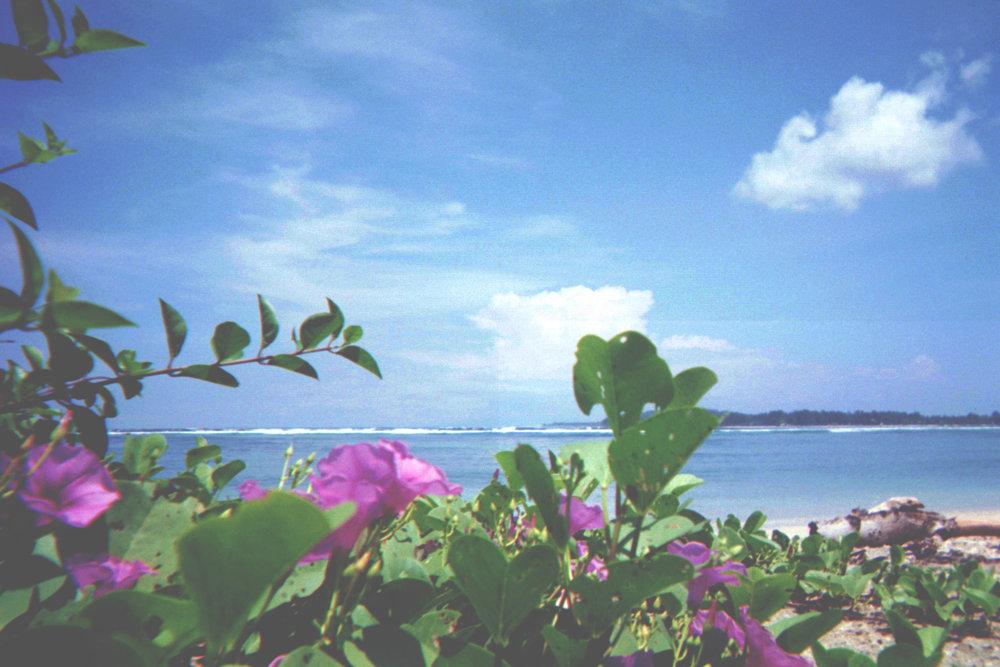 gili_flowers+beach.jpg