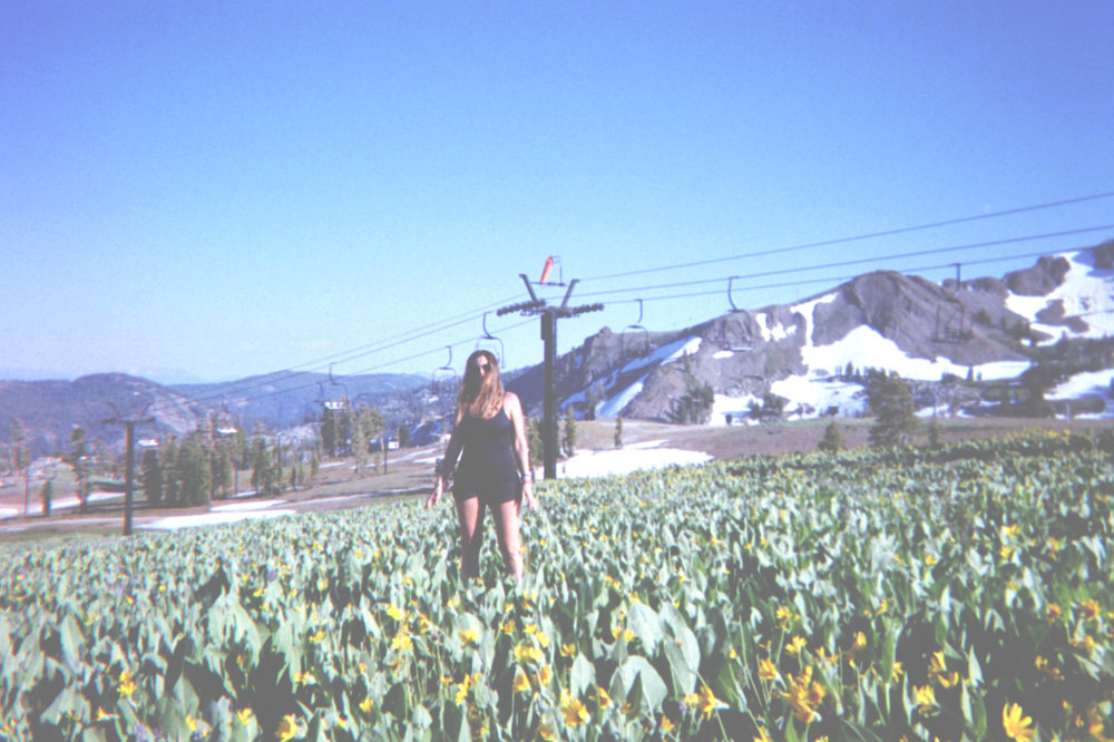 amongthewildflowers.jpg