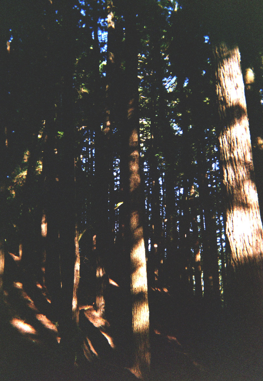 dipsearedwoods.jpg